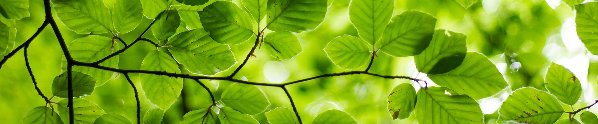 Grønne blader.