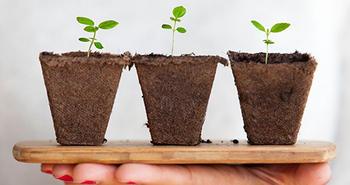 Planter som gror.